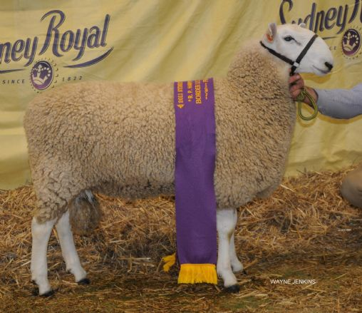 /edit/Images/2011 SYDNEY ROYAL SHOW 640 RET.JPG